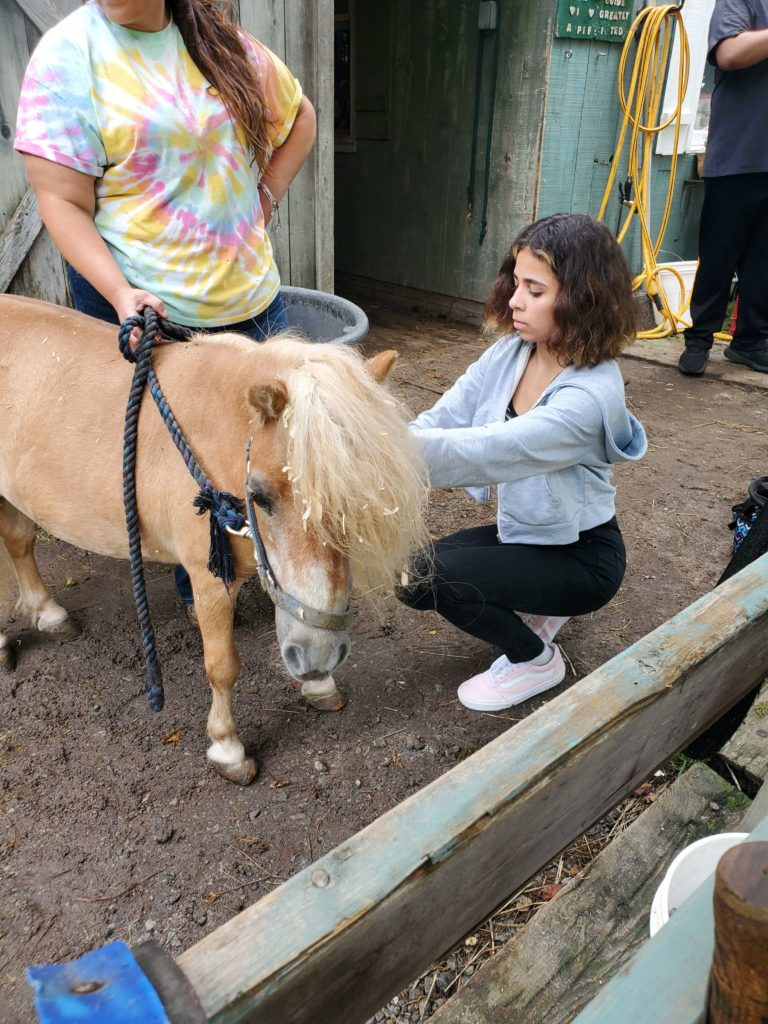 girl tending to small horsee